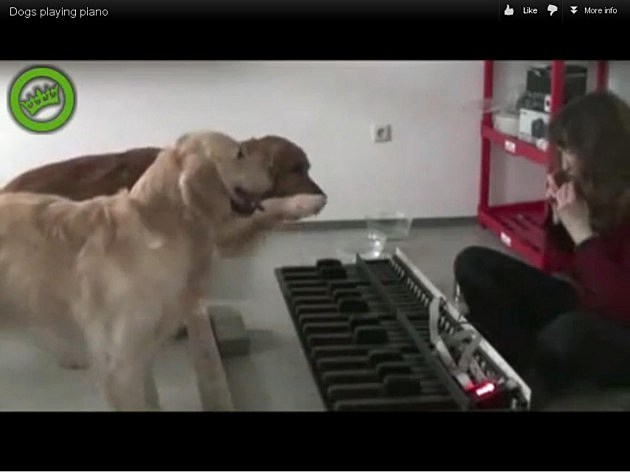Dogs Playing Piano