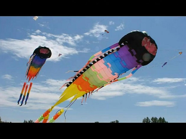 Kite Festival Fort Collins